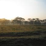 Morgenlandschaft Nakuru