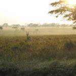 Morgenlandschaft Nakuru mit Gazelle